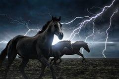 Running black horses Royalty Free Stock Image