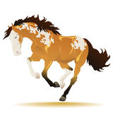 Running buckskin paint horse Royalty Free Stock Photos