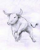 Running bull Royalty Free Stock Photos