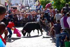 Running with the Bull in Arcos de la Frontera Stock Image