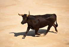 Running bull Royalty Free Stock Images