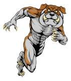 Running Bulldog Mascot. An illustration of a scary bulldog sports mascot running Royalty Free Stock Photography