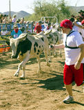 Running of the Bulls in America in Arizona Stock Photos