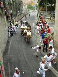 Running of the bulls in Pamplona Royalty Free Stock Photography