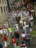 Running of the bulls in Pamplona Royalty Free Stock Photo