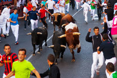 Running of the Bulls Stock Images