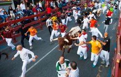 Running of the Bulls Stock Photography