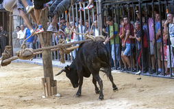 Running of the Bulls in Spain Royalty Free Stock Images