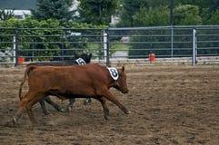 Running Calves Motion Blur Royalty Free Stock Image
