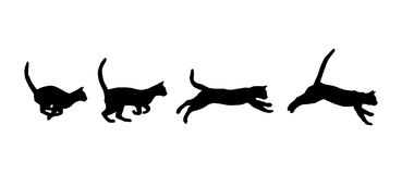 Running cat. On the white background Stock Photo