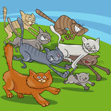 Running cats cartoon illustration Stock Photography