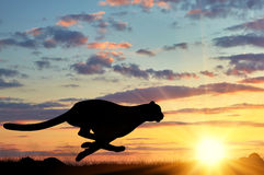Running cheetah silhouette Royalty Free Stock Images