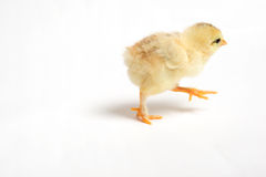 Running chick Stock Photography