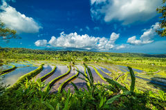 Running clouds over rice terraces Royalty Free Stock Photo