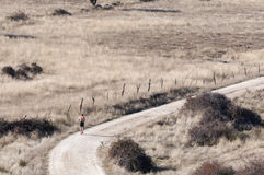 Running in a country road. Royalty Free Stock Image