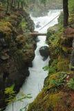 Running creek stock image
