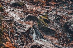 Running creek in the forest is washing away everything in its path stock images