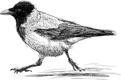 Running crow. Vector image of a funny running crow Stock Images