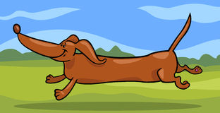 Running dachshund dog cartoon illustration Royalty Free Stock Photos