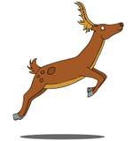 Running Deer Royalty Free Stock Photo