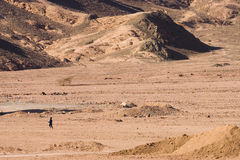 Running in desert. Desert in Sinai royalty free stock image