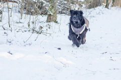 Running dog Royalty Free Stock Photos
