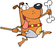 Running Dog With A Bone And Shovel Royalty Free Stock Photos