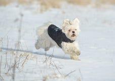 Running dog Royalty Free Stock Image