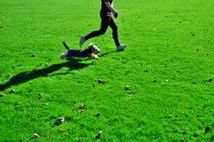 Running dog with girl Royalty Free Stock Photography