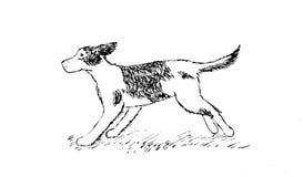 Running Dog hand drawing stock illustration