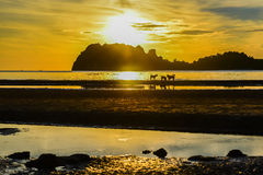 Running dog silhouette on the beach. Of Thailand Royalty Free Stock Photo