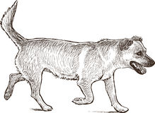 Running dog. Vector drawing of a walking dog stock images
