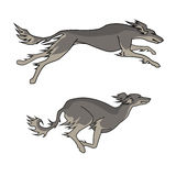 Running dogs saluki breed, two poses. Color vector image of running dogs saluki breed, two poses stock illustration