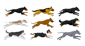 Running dogs vector illustration Royalty Free Stock Images