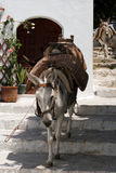 Running donkeys Royalty Free Stock Image