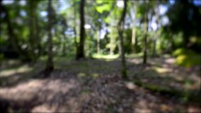 Running escape away through forest by fear. Chased blurred out stock video