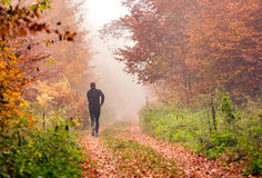 Running in foggy autumn forest Royalty Free Stock Photos
