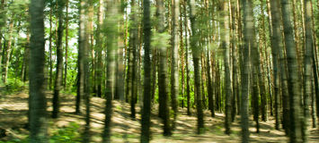 Running in the forest Stock Images