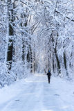 Running in the forest. Man running in the forest in winter time Royalty Free Stock Photos