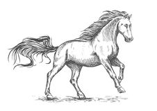 Running galloping white horse sketch portrait. White horse running and stomping sketch portrait. Vector mustang stallion freely gallop rushing against wind with Stock Photography