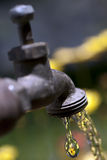 Running Garden Faucet Stock Photo
