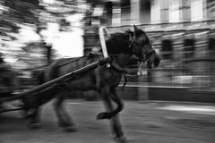 Running Ghost Like Horse at The Saddlebag Island Street Stock Image