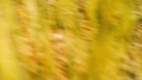 Running through the grass stock footage
