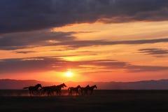 Running hästar Fotografering för Bildbyråer