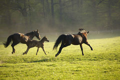 Running herd Royalty Free Stock Images