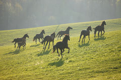 Running herd Royalty Free Stock Photo