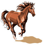 Running horse Royalty Free Stock Photography