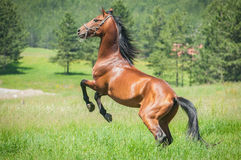 Running horse Stock Photos