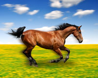 The running horse. In the meadow Stock Photos