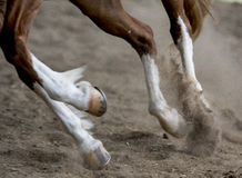 Running horse. On an arena with sand Stock Photo
